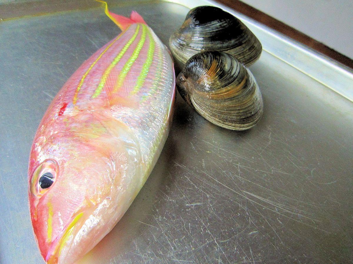 イトヨリとホンビノス貝