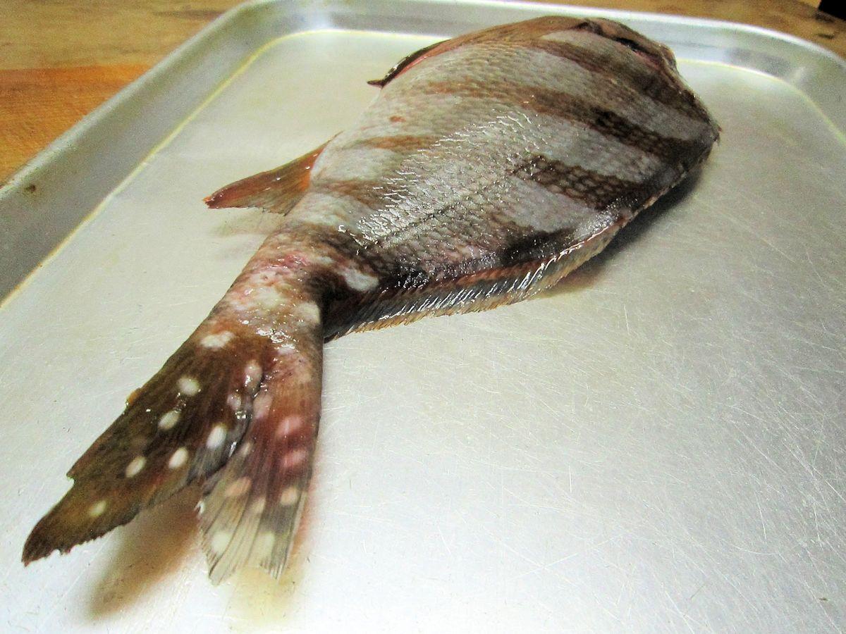 タカノハダイの白い斑紋