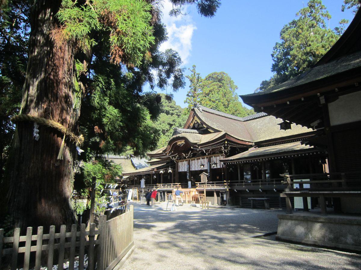 大神神社拝殿・巳の神杉