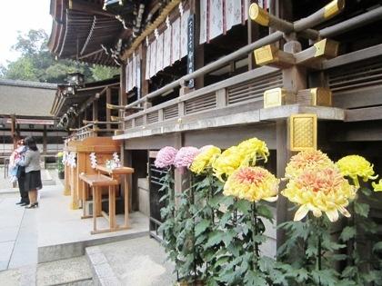 大神神社の奉納菊花