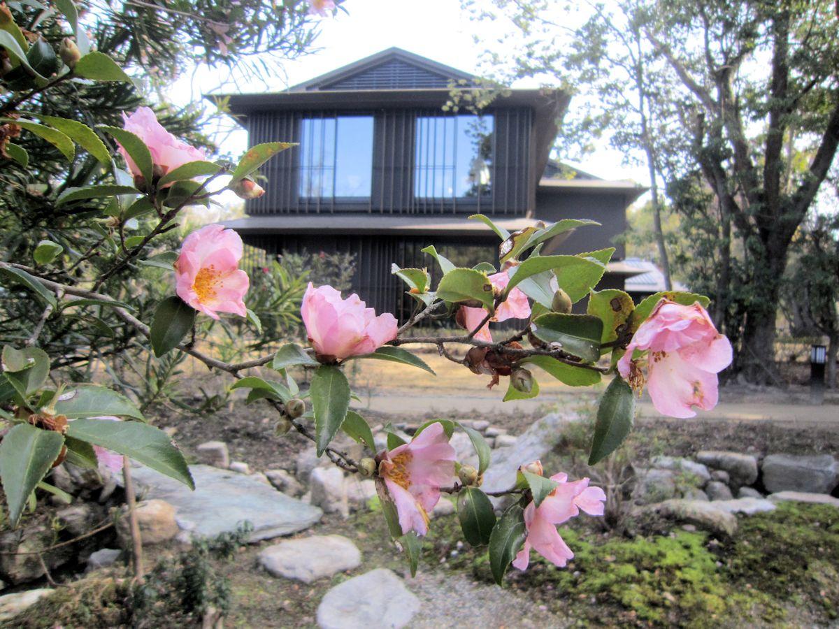 瑜伽山園地の花