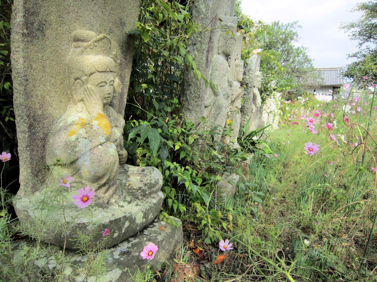 般若寺石仏とコスモス