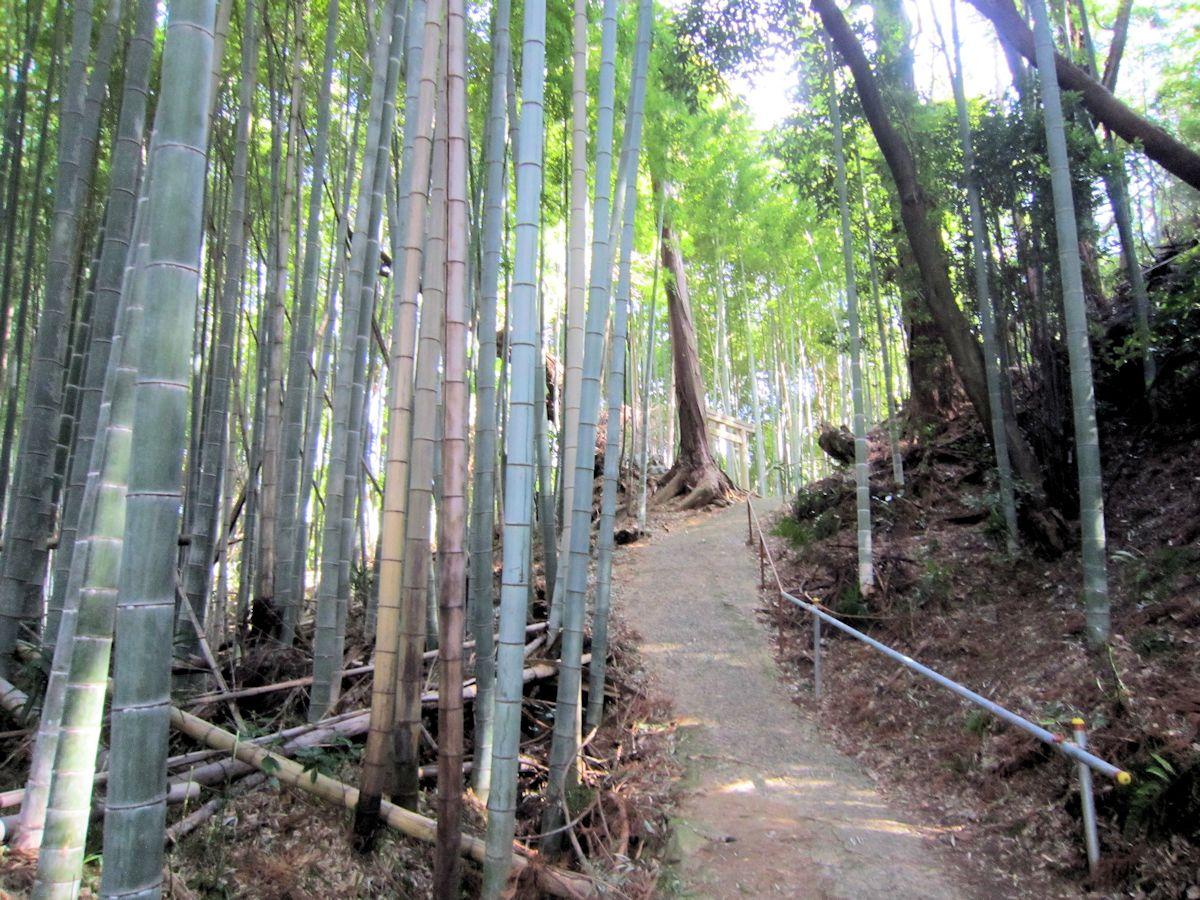 高田山口神社の参道