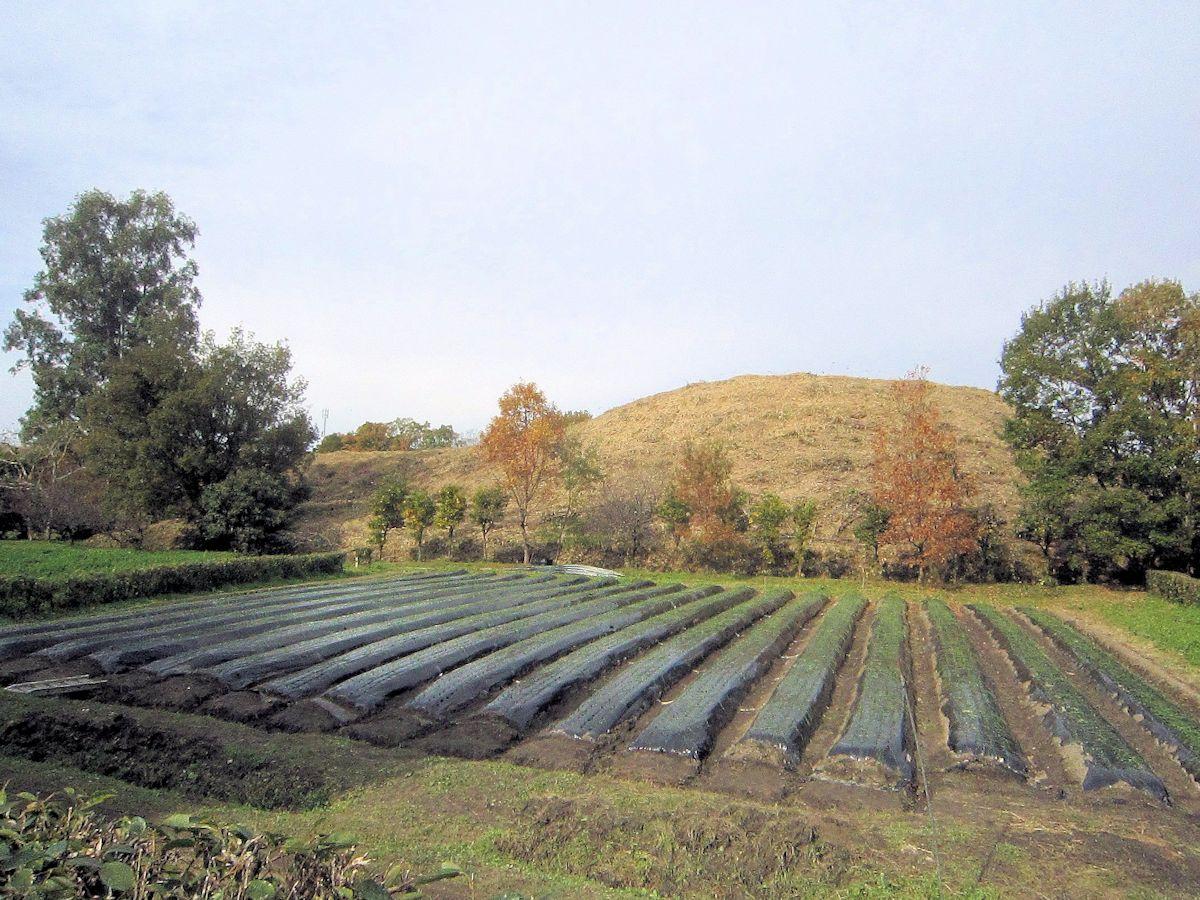 西山古墳と畑