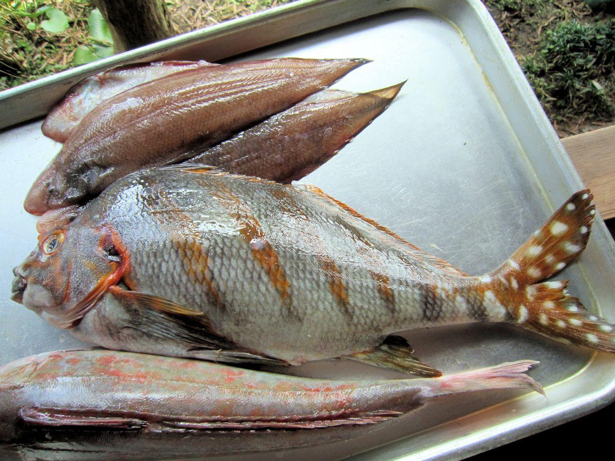 タカノハダイ、ホウボウ、舌ビラメ