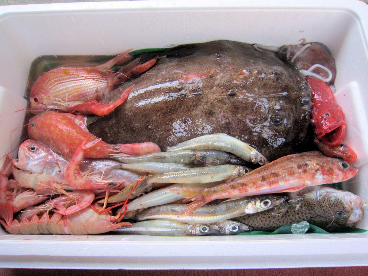 戸田漁港直送の深海魚ボックス