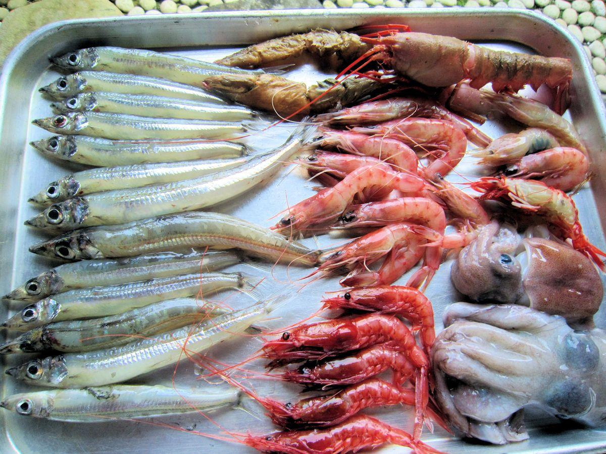 戸田漁港直送の深海生物