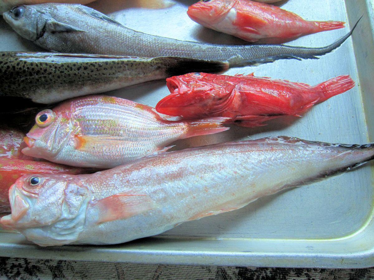 深海魚のヨロイイタチウオ
