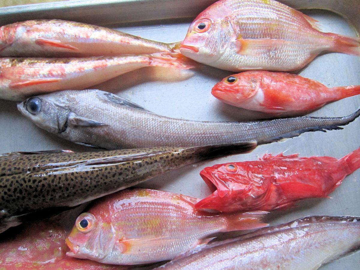 戸田漁港直送の深海魚