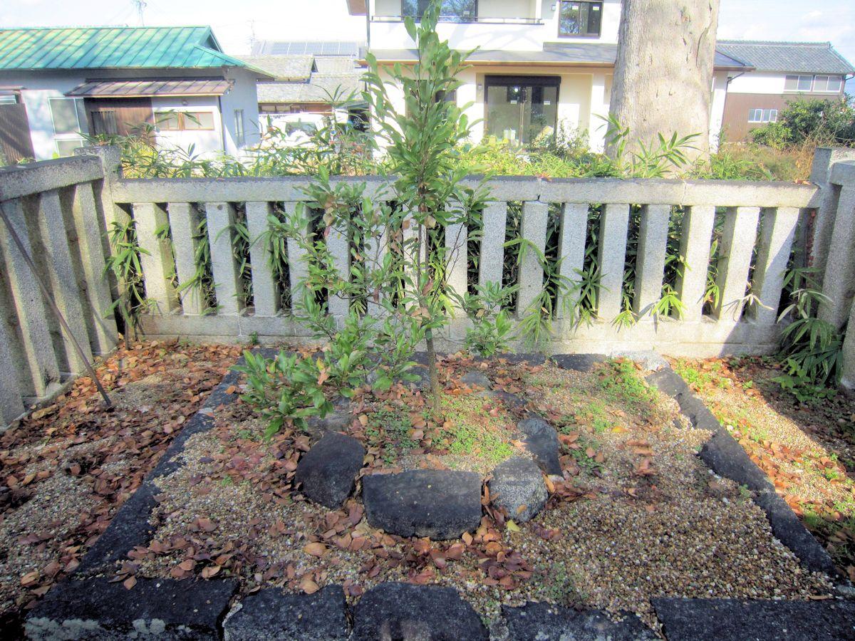 須賀神社の御神木