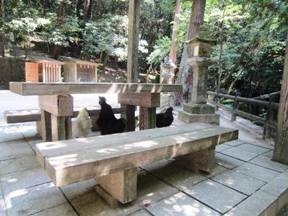 石上神宮の鶏